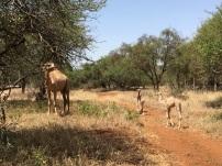 Women-around-the-world-MASSAï-Camels